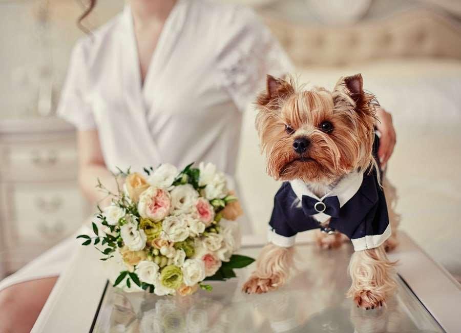 Bells Wedding Photography - 116